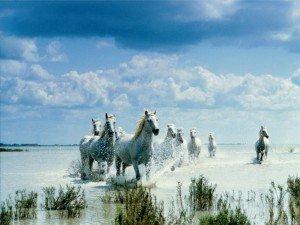 Vivre libre! dans Avoir la bonne attitude 233-chevaux-au-galop-wallfizz-300x225
